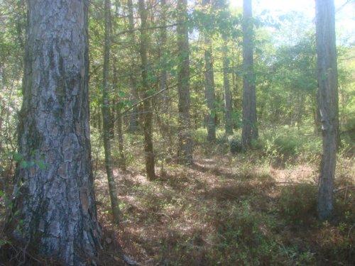 42 Acre Hunting & Homesite : Vienna : Dooly County : Georgia