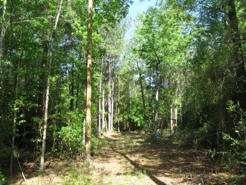 Ready To Go Hunting Tract : Huntington : Angelina County : Texas