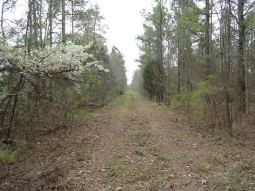 Highway 702 Timber Tract : Ninety Six : Greenwood County : South Carolina
