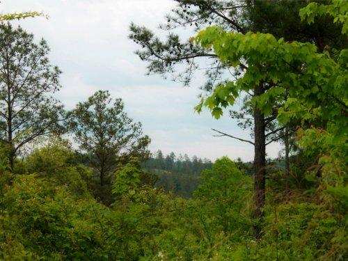 Talking Rock:  Large Acreage : Talking Rock : Pickens County : Georgia