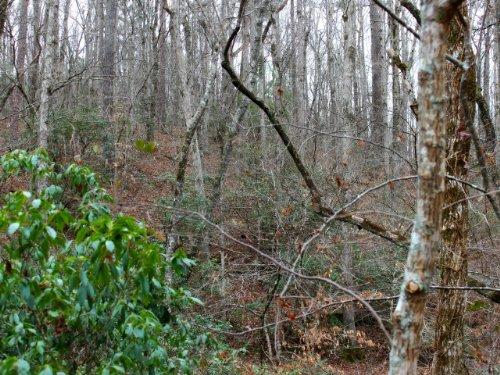 Talking Rock: Wooded Hunting Land : Talking Rock : Pickens County : Georgia