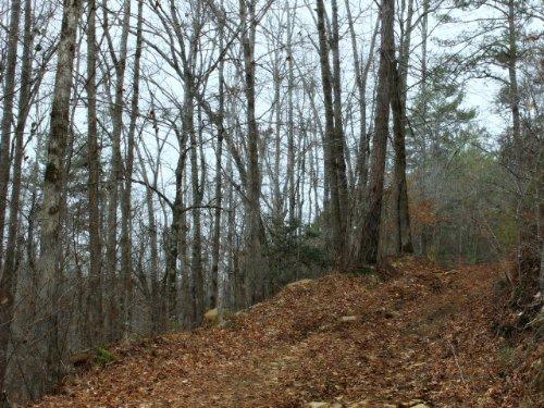 Talking Rock: Ideal Hunting Land : Talking Rock : Pickens County : Georgia