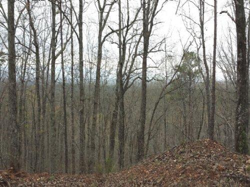 Oak Mountain Tract : Near Wedowee : Randolph County : Alabama
