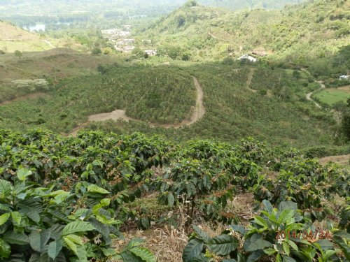 69 Ac. Coffee Farm W/ River : Orosi Valley : Costa Rica