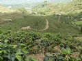 69 Acre Coffee Farm With River : Orosi Valley : Costa Rica