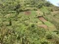 69 Acre Former Coffee Farm, River : Orosi Valley : Costa Rica