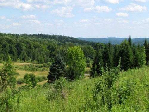 Hunting Land Near State Forest : Lincklaen : Chenango County : New York