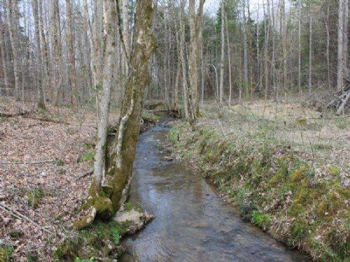 Williams 154.35 : Tompkinsville : Monroe County : Kentucky