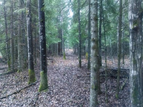 42 Flat Wooded Acres : Hillman : Montmorency County : Michigan