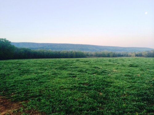 1644 +/- Acre Cattle Farm : Danville : Yell County : Arkansas