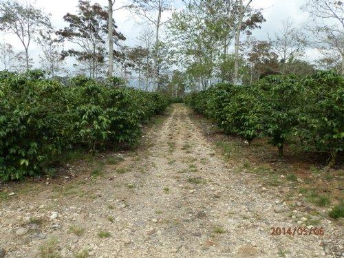 Productive 72.9 Ac. Coffee Farm : Santa Teresita De Turrialba : Costa Rica