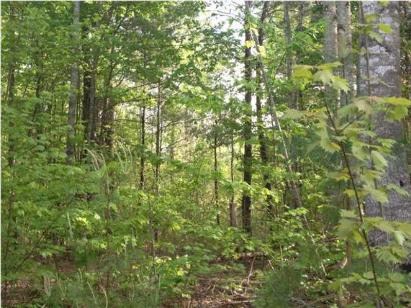 7+/- Acres Borders State Forest : Sale Creek : Hamilton County : Tennessee