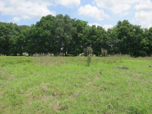 Reduced 35.32ac - Pasture & Meadow : Newberry : Alachua County : Florida