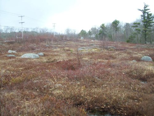 19 Acre Blueberry Parcel : Steuben : Washington County : Maine