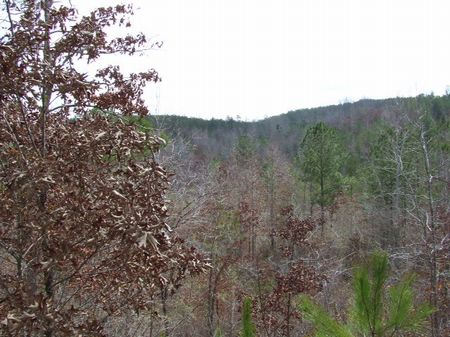 Hurry 80 Acres Only $1200/acre : Sprott : Perry County : Alabama