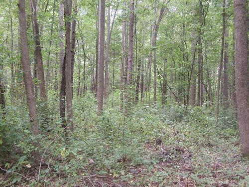 Settlers Row -.75 Acre Lot : Laurens : South Carolina