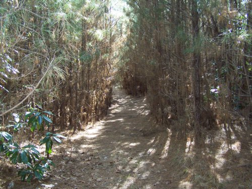 55 Acres Of Timber & Wildlife : Crosby : Amite County : Mississippi