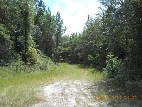 65.64 Acres On Paved Road : Madison : Florida