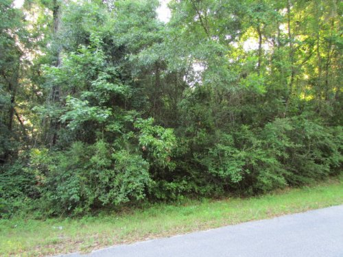 Reduced, Wooded Lot 778432 : Chiefland : Levy County : Florida