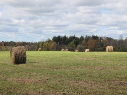 55 Acres - Owner Financing : Newport : Herkimer County : New York