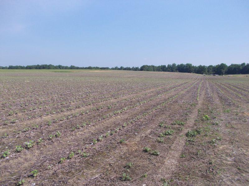 75 Acre Farm-Holtville/Slapout : Holtville : Elmore County : Alabama