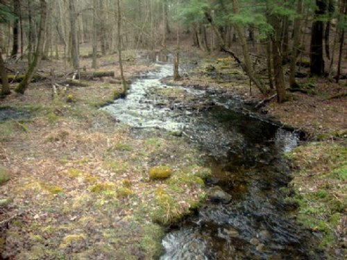 Borders State Forest Financing : Florence : Oneida County : New York