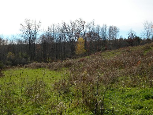 Land With Pond And Pasture : Lindley : Steuben County : New York