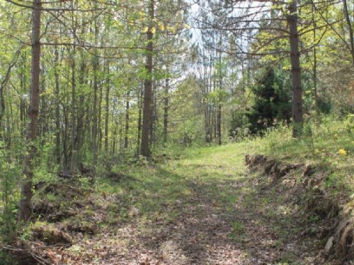 6 Acres Borders State Forest : Brookfield : Madison County : New York