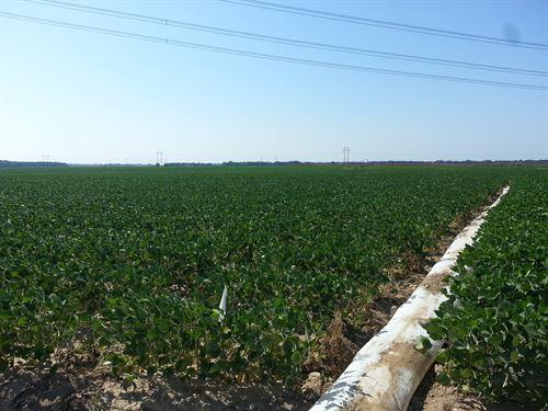 1,272 Acre Row Crop Paradise : Wheatley : Saint Francis County : Arkansas