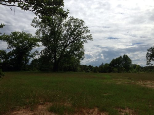80 +/- Ac Near Petrey : Petrey : Pike County : Alabama