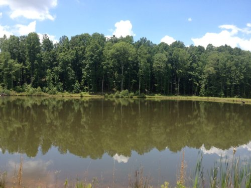 202 +/- Ac With 7 Ac Lake : Banks : Pike County : Alabama