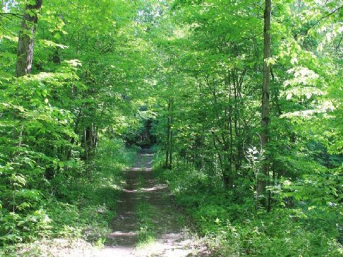 7+ Secluded, Wooded Acres : Williamstown : Oswego County : New York