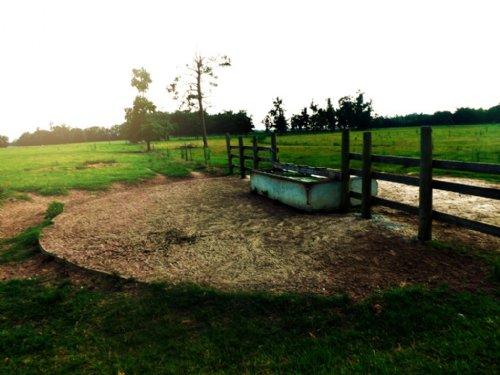 Bark Camp Cattle Farm : Waynesboro : Burke County : Georgia