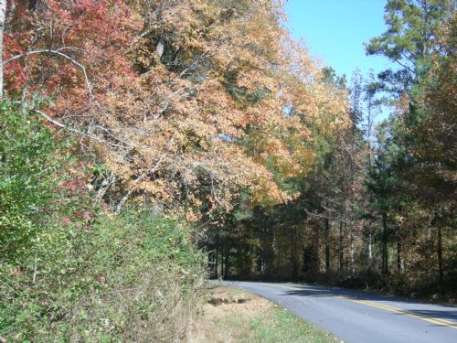 Trimble Hollow Road : Adairsville : Gordon County : Georgia