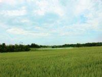 2000+ Acre Texas Farm & Ranch : Roxton : Lamar County : Texas