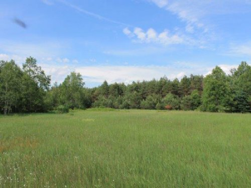 50+ Acres Bordering State Forest : Stockholm : St. Lawrence County : New York
