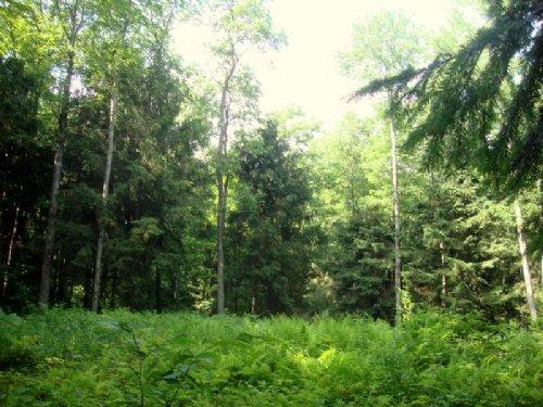 11 Acres Salmon River Reservoir : Redfield : Oswego County : New York