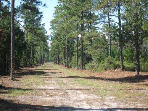 Acreage Close To Town : Kingsland : Camden County : Georgia