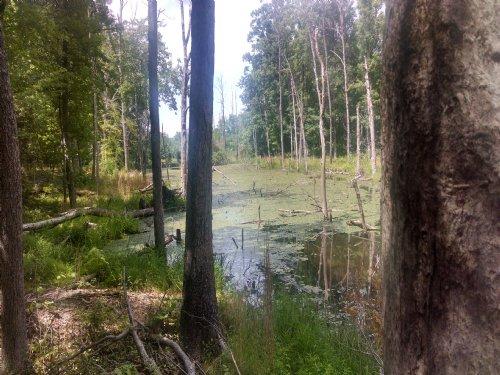 Near The James : Fork Union : Fluvanna County : Virginia