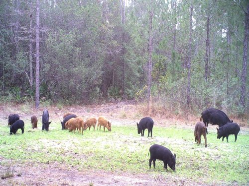 53 Acres With Wildlife Galore : Jesup : Wayne County : Georgia