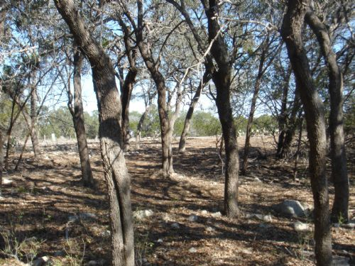 1.2 Acre Wooded Homesite On Creek : New Braunfels : Comal County : Texas