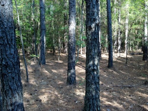5 Acre $495 Down Owner Finance : Greensboro : Greene County : Georgia