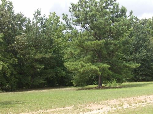Oakley Estates, .50 Acre Lot : Hillsboro : Coffee County : Tennessee