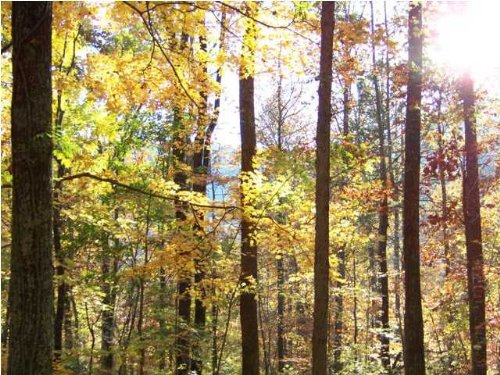 5.00+/- Acres Mountain Views : South Pittsburg : Marion County : Tennessee