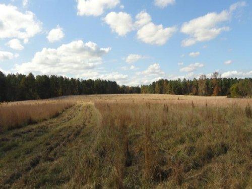 Mount Moriah Farm : Greenwood : South Carolina