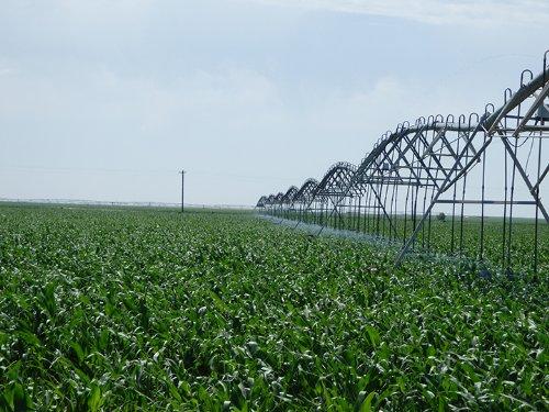 Beautiful 2400 Acre Irrigated Farm : Delhart : Hartley County : Texas