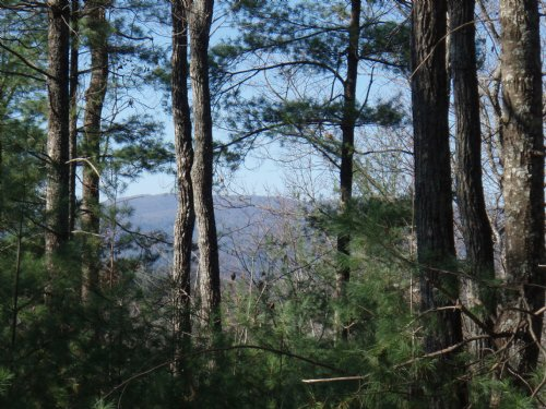 1.65 Ac Mountain Lot With Views : Ellijay : Gilmer County : Georgia