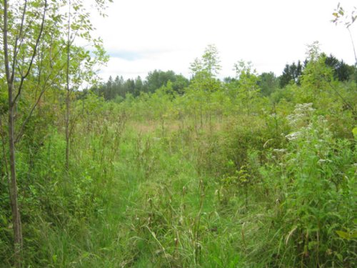 120+ Acres Near Rochester : Palmyra : Wayne County : New York