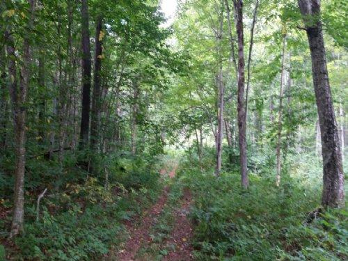 New York Hunting Land Atv Trails : Redfield : Oswego County : New York