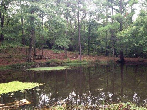 12 +/- Acres With A Pond : Banks : Pike County : Alabama